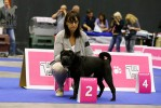 2nd pl in puppy males class, 2-е место в классе щенков кобелей Ileves De L Empire De Naikolomba
